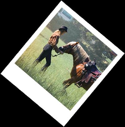 Horse polaroid