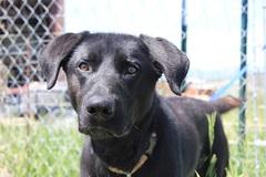 Free Consultation: Utah Valley Animal Rescue - Spanish Fork, UT