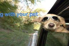 Request Quote: Pet Taxi - Folkestone, UK