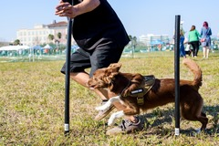 Request Quote: AlphA and Omega Dog Training - Fort Lauderdale, FL