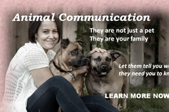 Bookable Offer: Certified Animal Communicator