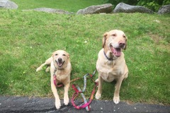 Bookable Offer: Local Dog Walker and Pet Care Giver - Redding, CT