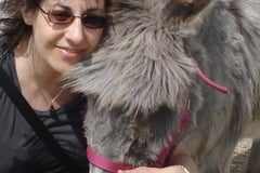Request Quote: Reiki for Pets ~ Healing for All Beings ~ Guelph ON