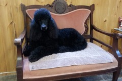 Free Consultation: Pet Grooming by Carole - Kingston, ON