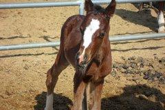 Free Consultation: Hopeful Hooves Equine Rescue & Holistic Healing- Buckeye, AZ