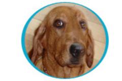 Pet Paradise Pet Sitters - Apex, NC