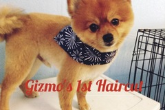 Bookable Offer: Dog and Cat Grooming  - Rio Linda, CA