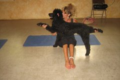 Bookable Offer: Dog Massage/Doggie Training - Palm Harbor, FL