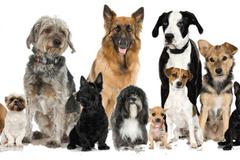 Request Quote: Eddie Rivera Dog Training - Delhi, NY