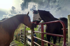 Free Consultation: Horse Boarding - Harrisonburg, VA
