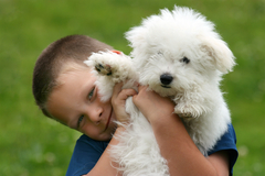 Free Consultation: In Relation With Dogs - Behavior & Training - Lincoln, NE