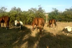 Request Quote: Twilight Farms Horse Retirement - Anza, CA