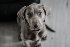 Pets Plus - Plymouth, MA