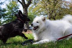 Request Quote: Saving Grace Petcare - Washington, DC