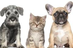 Request Quote: Blissful Pet Care - Saratoga Springs, NY