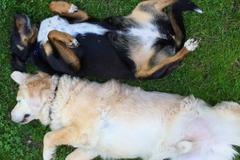 Bookable Offer: Prestigious Pet Care Walks - Blacksburg, VA