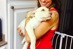Bookable Offer: Animal Crystal Healing - Sag Harbor, NY