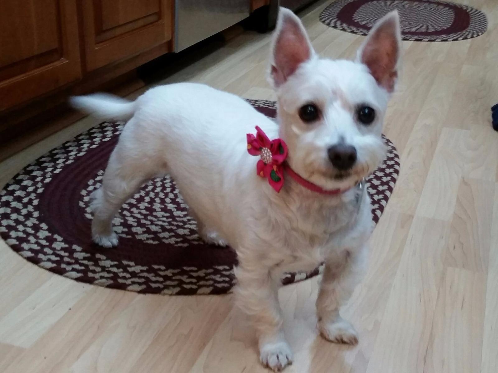 Pet Sitter And Dog Walker Windsor Pa