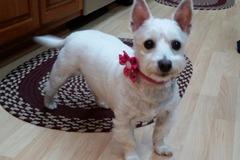 Pet Sitter and Dog Walker - Windsor, PA