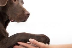 Bookable Offer: Animal Reiki Healing - Allendale, NJ