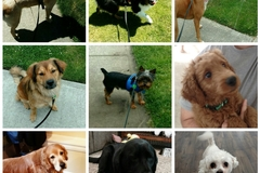 Request Quote: Guardian Angel Pet Sitting - Home Visits - Olympia, WA