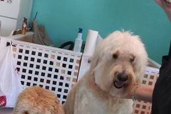 Bookable Offer: Quality Pet Grooming - Largo, FL