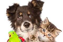 Free Consultation:   Pet Loss Psychotherapy -Chicago, Illinois