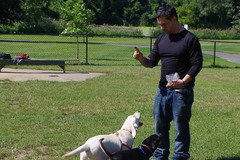 Free Consultation: The Happiest Dogs Obedience Training - Redding, CT