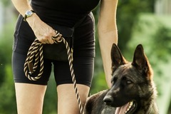 Bookable Offer: Become A Certified Dog Trainer/Behaviour Therapist