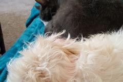 Request Quote: DNA Dog Training - De Motte, IN