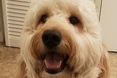 Fidos Following Dog Walking and Pet Sitting - San Diego, CA