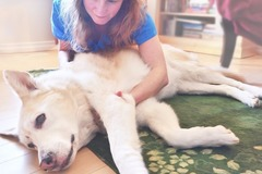 Bookable Offer: Canine Massage - Squamish, BC