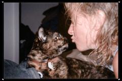 Request Quote: Lisa Larson: Pawstalk Animal Communication & Reiki