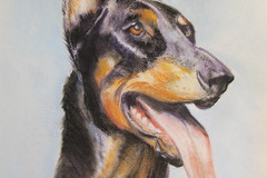 Bookable Offer: Pet Portraits by Donna Solin - San Rafael, CA