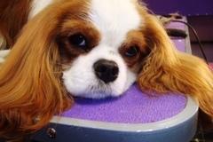 Pet Sitter/Dog Walker in Newtown - Bucks County, PA