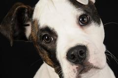 Professional Dog Training - Washington, IL