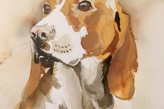 Bookable Offer: Miss Sally's Pet Portraits - Wedemark, Germany