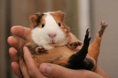 Enchanted Pet Massage - Southern NH