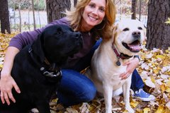 Free Consultation: Dog Behavioral Training - Raleigh, NC