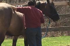 Request Quote: Windhorse Reiki & Acupressure for Animals - Hardwick, VT