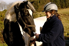 Bookable Offer: Felicity George - IAABC Certified Horse Behaviour Consultant