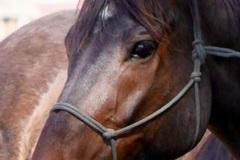 Free Consultation: Sonoma Equine Rescue, Rehab & Adoption- Santa Rosa, CA