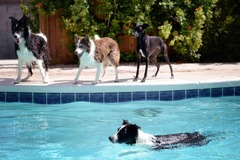 Bookable Offer: Doggie Daycare and Boarding - North Las Vegas, NV