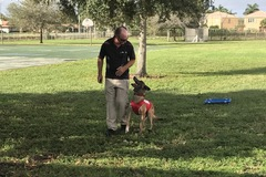 Free Consultation: Sit Means Sit Palm Beach- creating happy & confident dogs