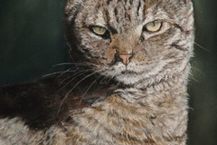 Bookable Offer: Pet Portraits in Pastel, Framed - Willington, CT