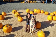 Request Quote: Dog Obedience Instructor - San Diego, CA