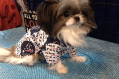 Custom Designed Handcrafted Pet Apparel - Houston, TX