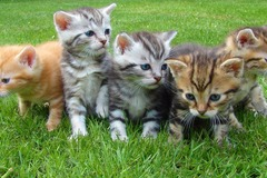 Request Quote: Cats-Only Veterinary Care - Bozeman, MT