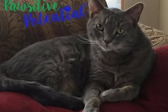 Request Quote: Pawsitive Potential - Certified Feline Behaviorist