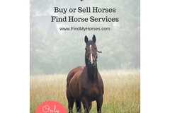 Bookable Offer: Horse Service Promotions
